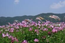 $松山テナント情報館のブログ